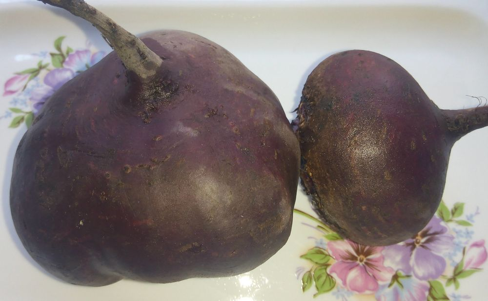 Свекла Мулатка — один из лучших сортов для консервации