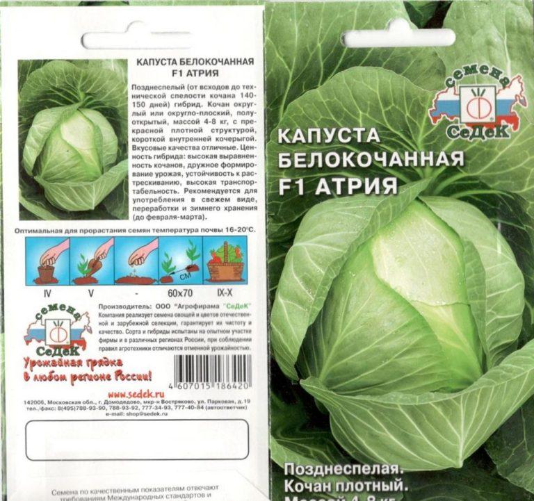 Капуста Атрия — описание и выращивание