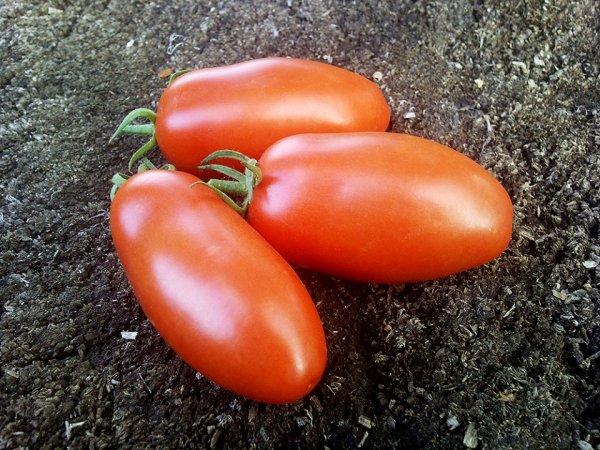 Томат Алый мустанг характеристика и описание сорта урожайность отзывы фото
