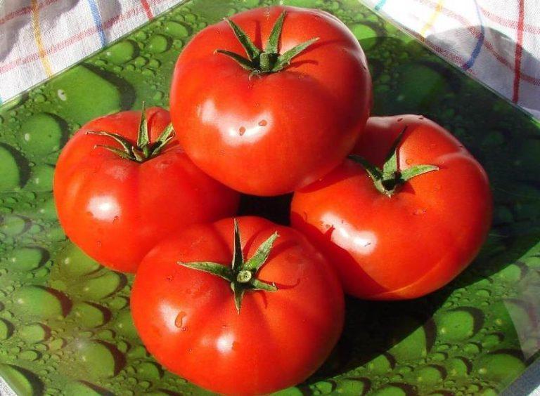 Томат Бобкат - характеристика и описание сорта, фото, урожайность, отзывы о гибриде