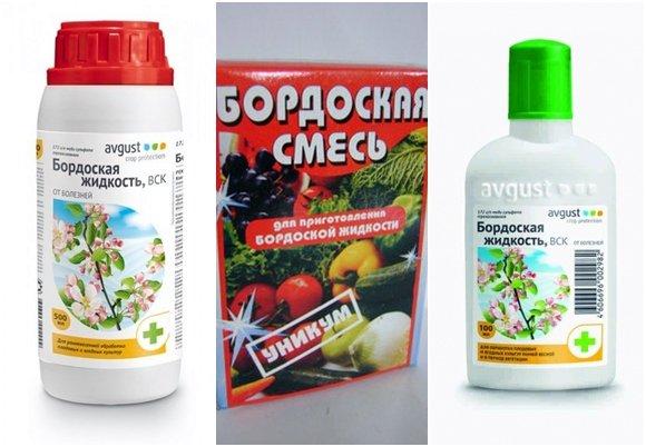 Применение в садоводстве и на огороде бордосской жидкости как приготовить раствор