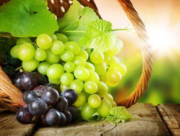 Инструкция по применению фунгицида «Квадрис» для обработки винограда, срок ожидания и действие