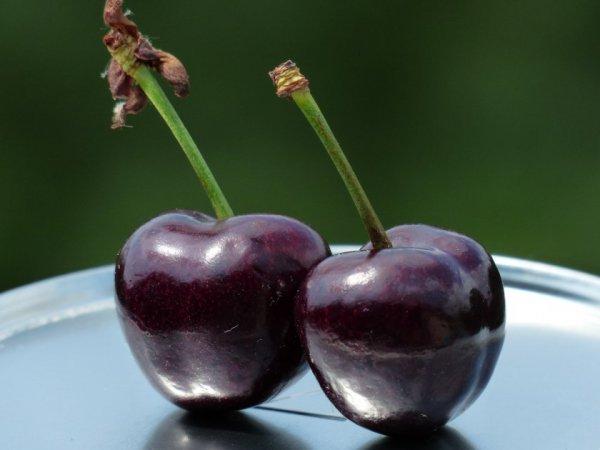 Сорт вишни ленинградская черная