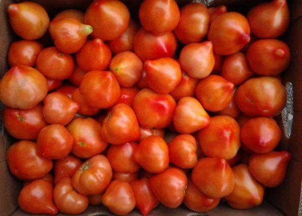 Томат мадонна f1 характеристика и описание сорта выращивание с фото